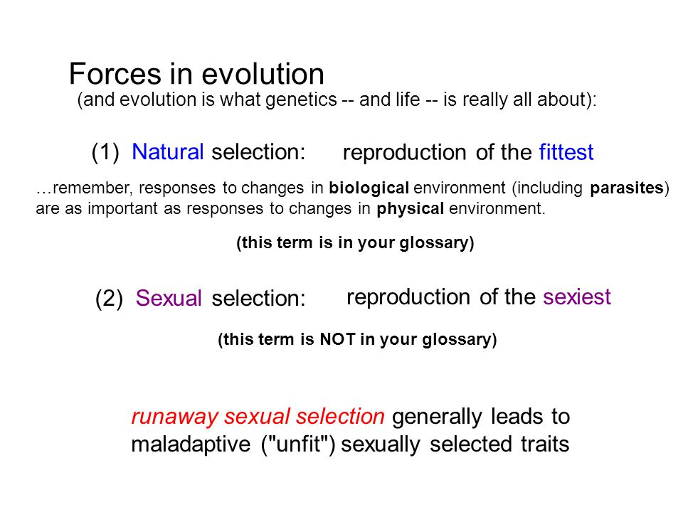 Forces in evolution (and evolution is what genetics -- and life -- is really all about): (1) Natural selection: reproduction of the fittest (2) Sexual selection: reproduction of the sexiest runaway sexual selection generally leads to maladaptive ( unfit ) sexually selected traits …remember, responses to changes in biological environment (including parasites) are as important as responses to changes in physical environment.