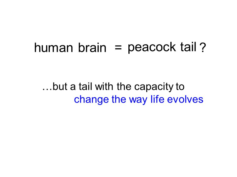 peacock tail …but a tail with the capacity to change the way life evolves human brain = ?