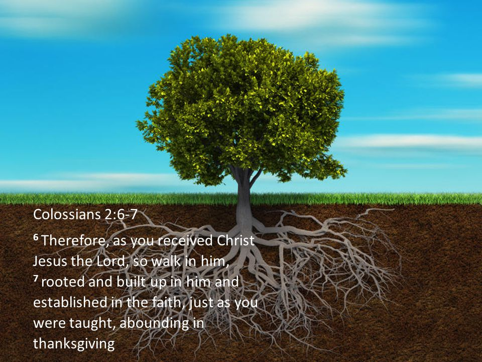 Colossians 2:6-7 6 Therefore, as you received Christ Jesus the Lord, so walk in him, 7 rooted and built up in him and established in the faith, just as you were taught, abounding in thanksgiving