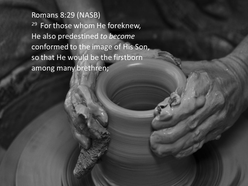 Romans 8:29 (NASB) 29 For those whom He foreknew, He also predestined to become conformed to the image of His Son, so that He would be the firstborn among many brethren;