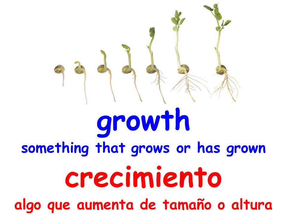 growth something that grows or has grown crecimiento algo que aumenta de tamaño o altura