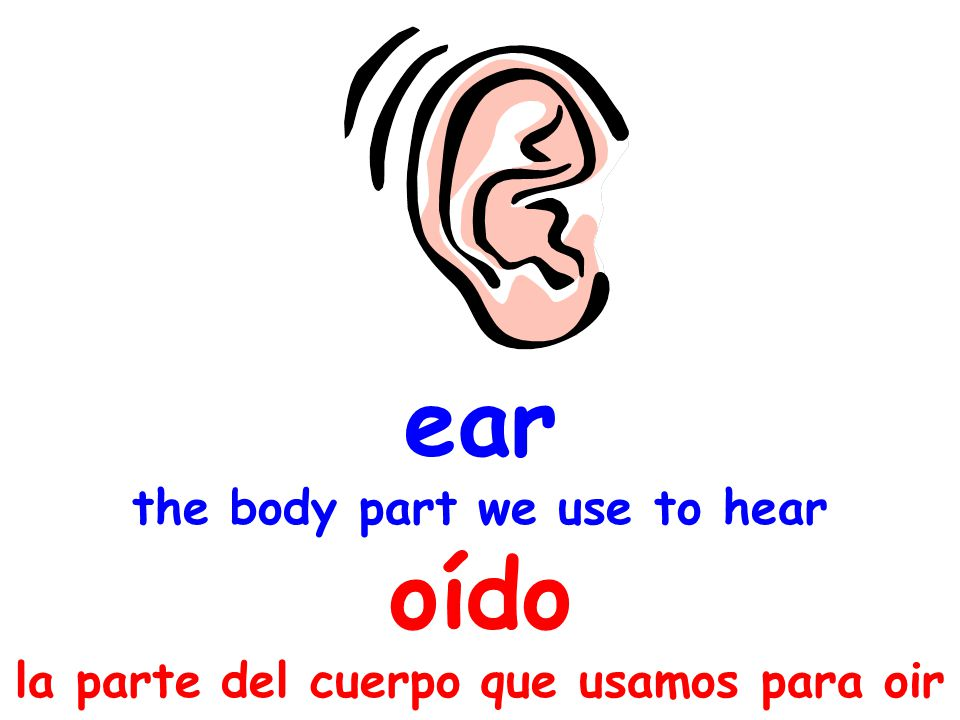 ear the body part we use to hear oído la parte del cuerpo que usamos para oir