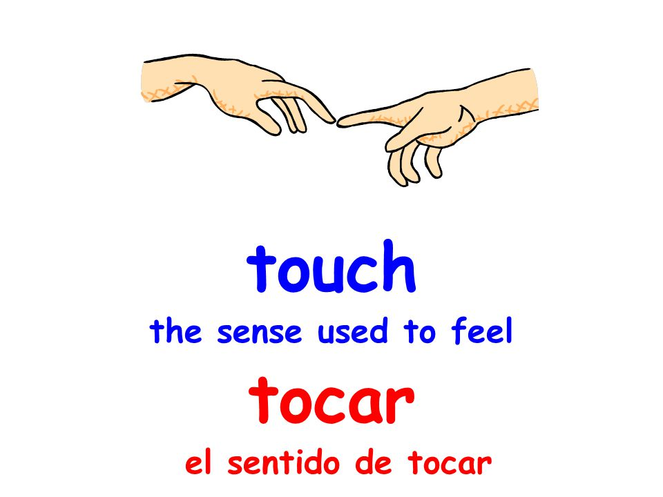 touch the sense used to feel tocar el sentido de tocar