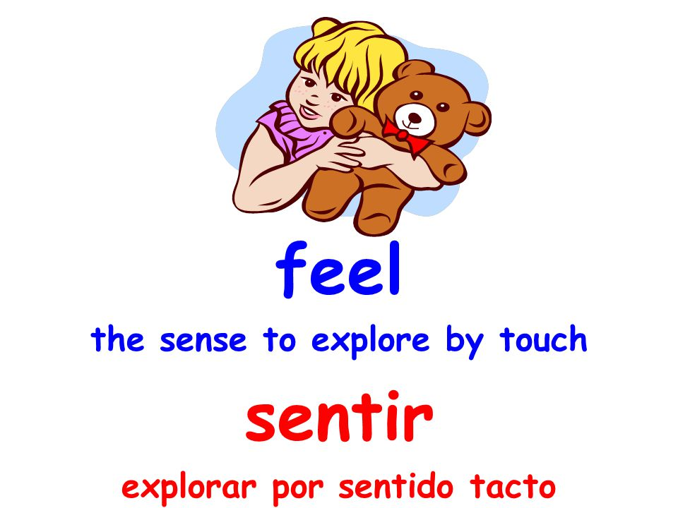 feel the sense to explore by touch sentir explorar por sentido tacto