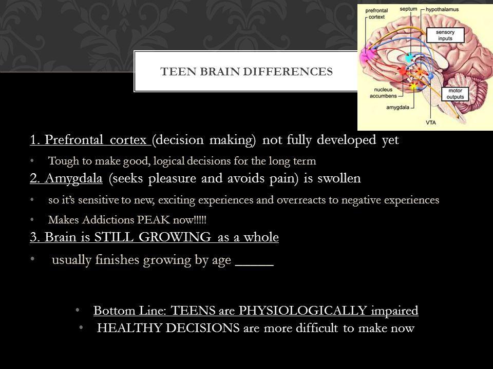 1.Prefrontal cortex 1.