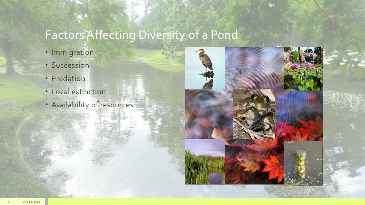 Factors Affecting Diversity of a Pond Immigration Succession Predation Local extinction Availability of resources July 22, 20129