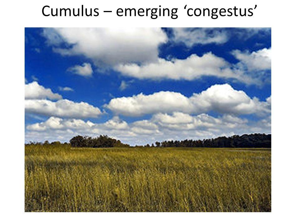 Cumulus – emerging 'congestus'