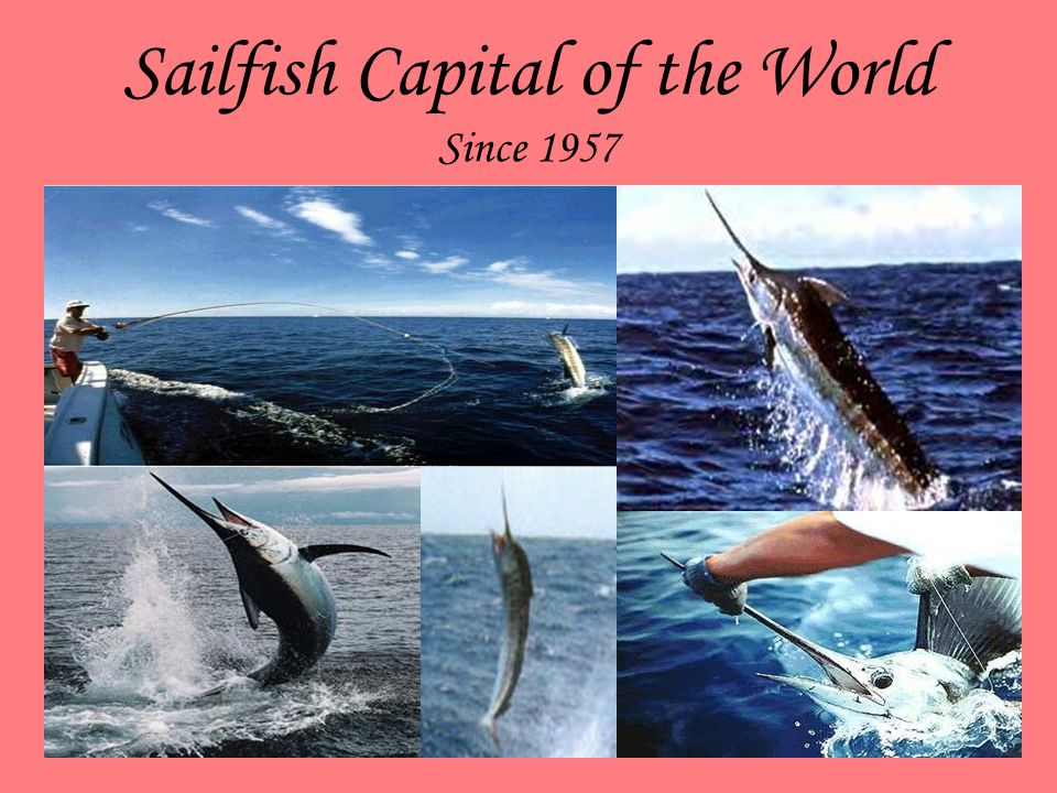 Sailfish Capital of the World Since 1957 If you desire the challenge of sport fishing, there is none finer than Manzanillo. It is the Sailfish Capital