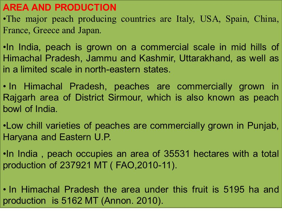 AREA AND PRODUCTION The major peach producing countries are Italy, USA, Spain, China, France, Greece and Japan.