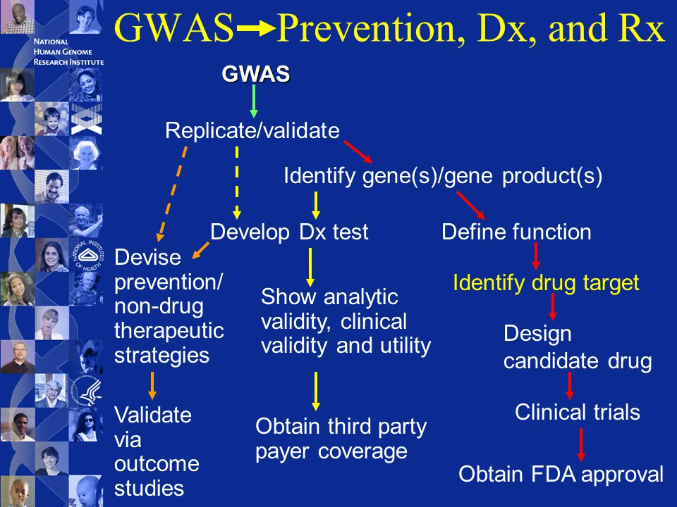 GWAS Prevention, Dx, and Rx GWAS Replicate/validate Identify gene(s)/gene product(s) Define function Identify drug target Design candidate drug Clinical trials Obtain FDA approval Develop Dx test Show analytic validity, clinical validity and utility Obtain third party payer coverage Devise prevention/ non-drug therapeutic strategies Validate via outcome studies