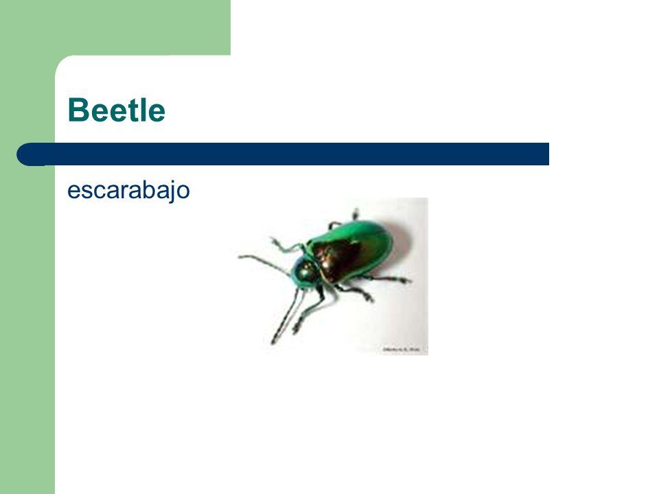 Beetle escarabajo