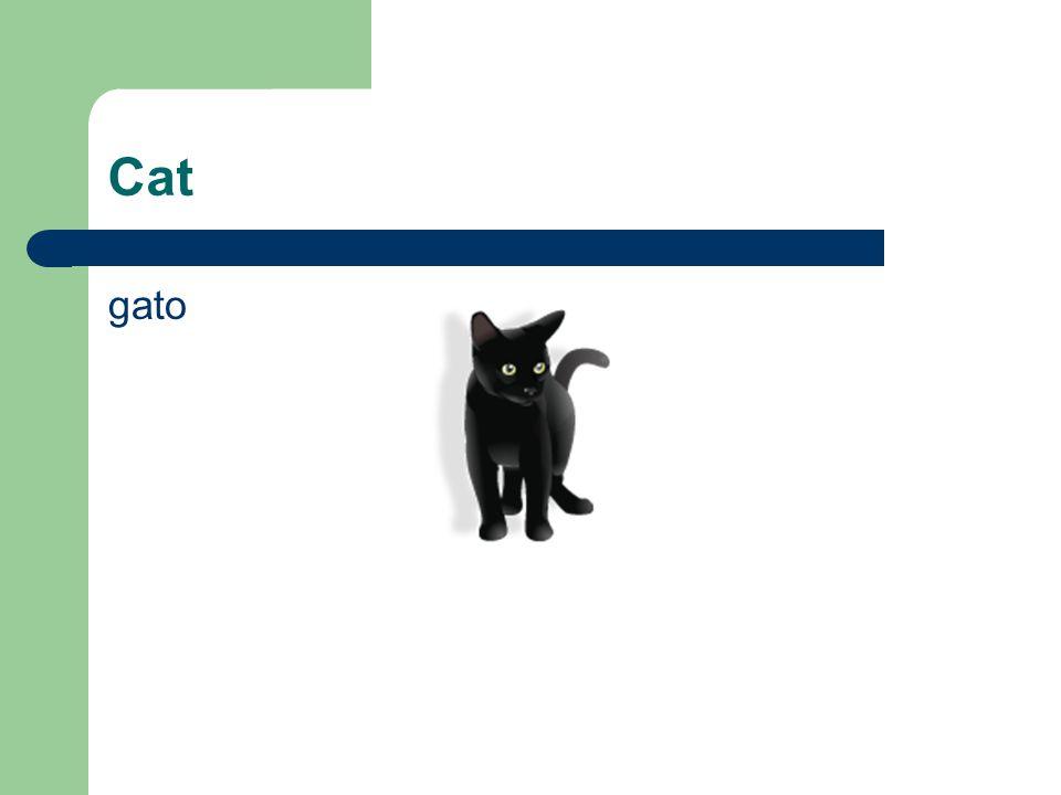 Cat gato