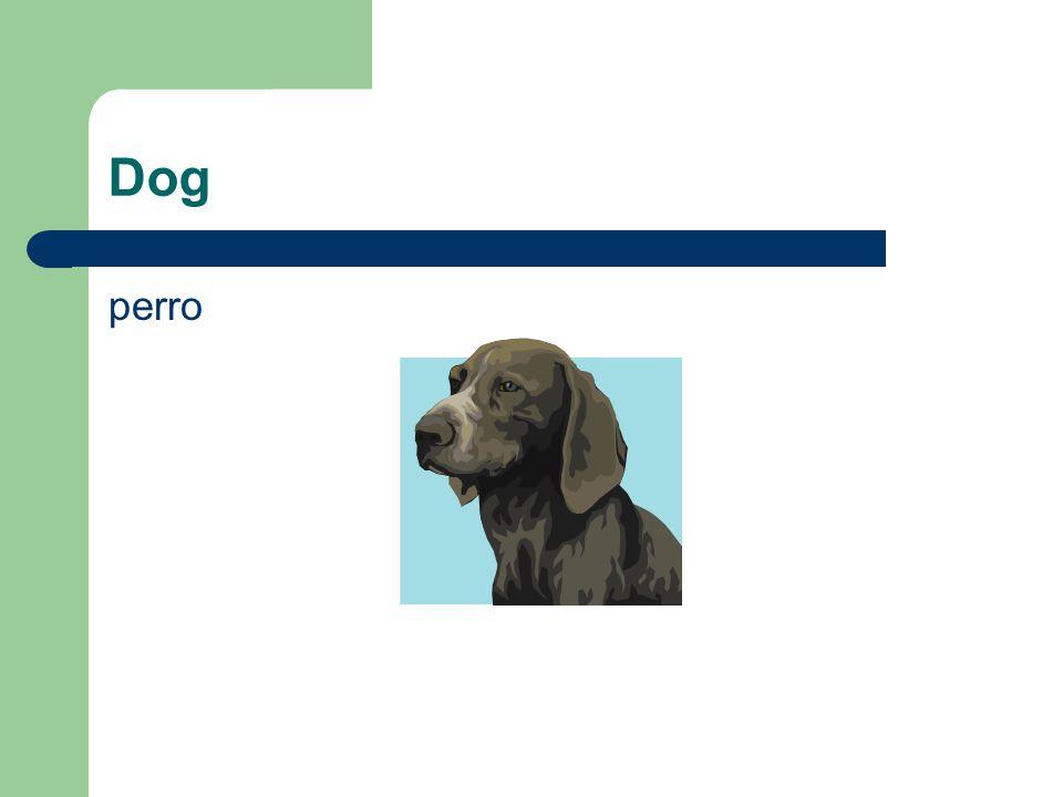 Dog perro