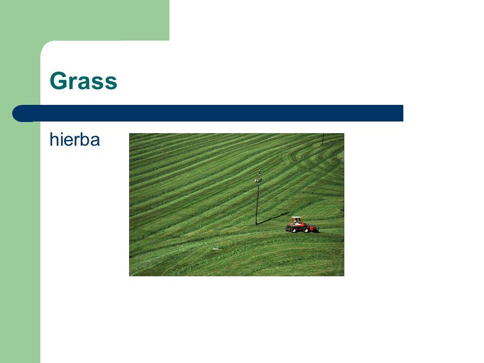 Grass hierba