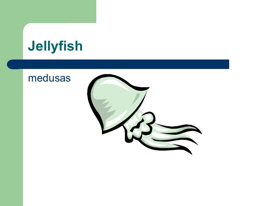 Jellyfish medusas