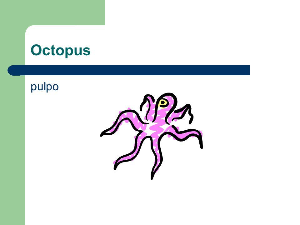 Octopus pulpo