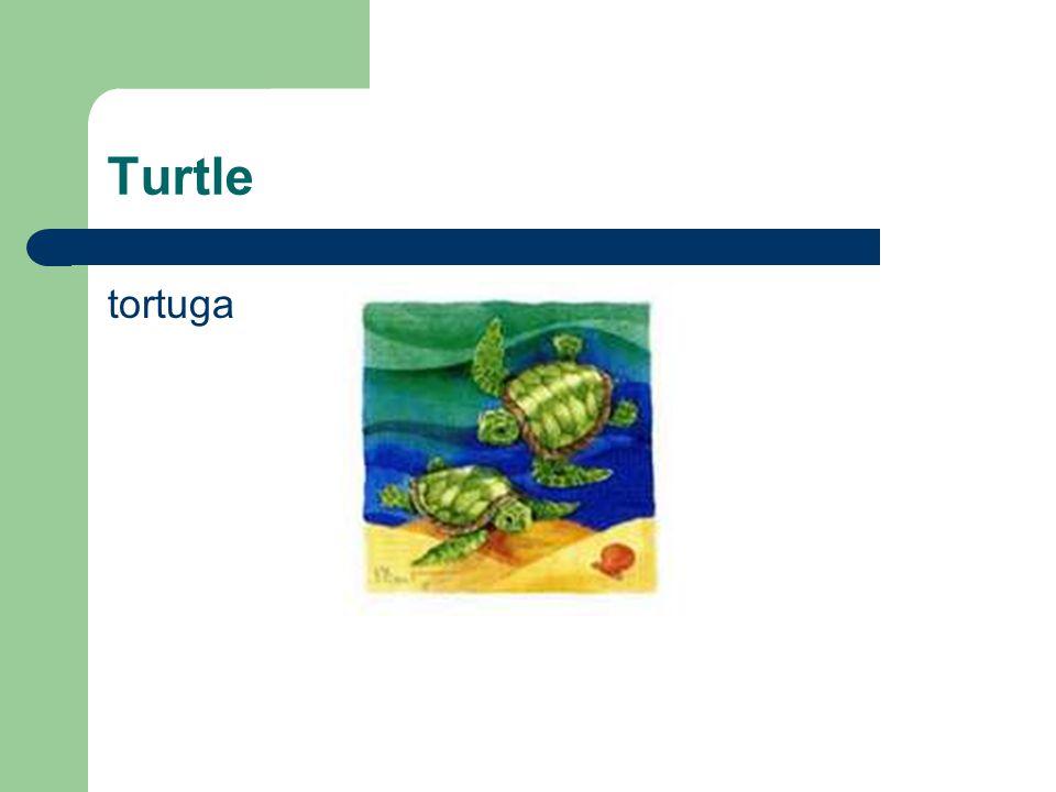 Turtle tortuga