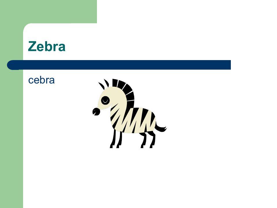 Zebra cebra
