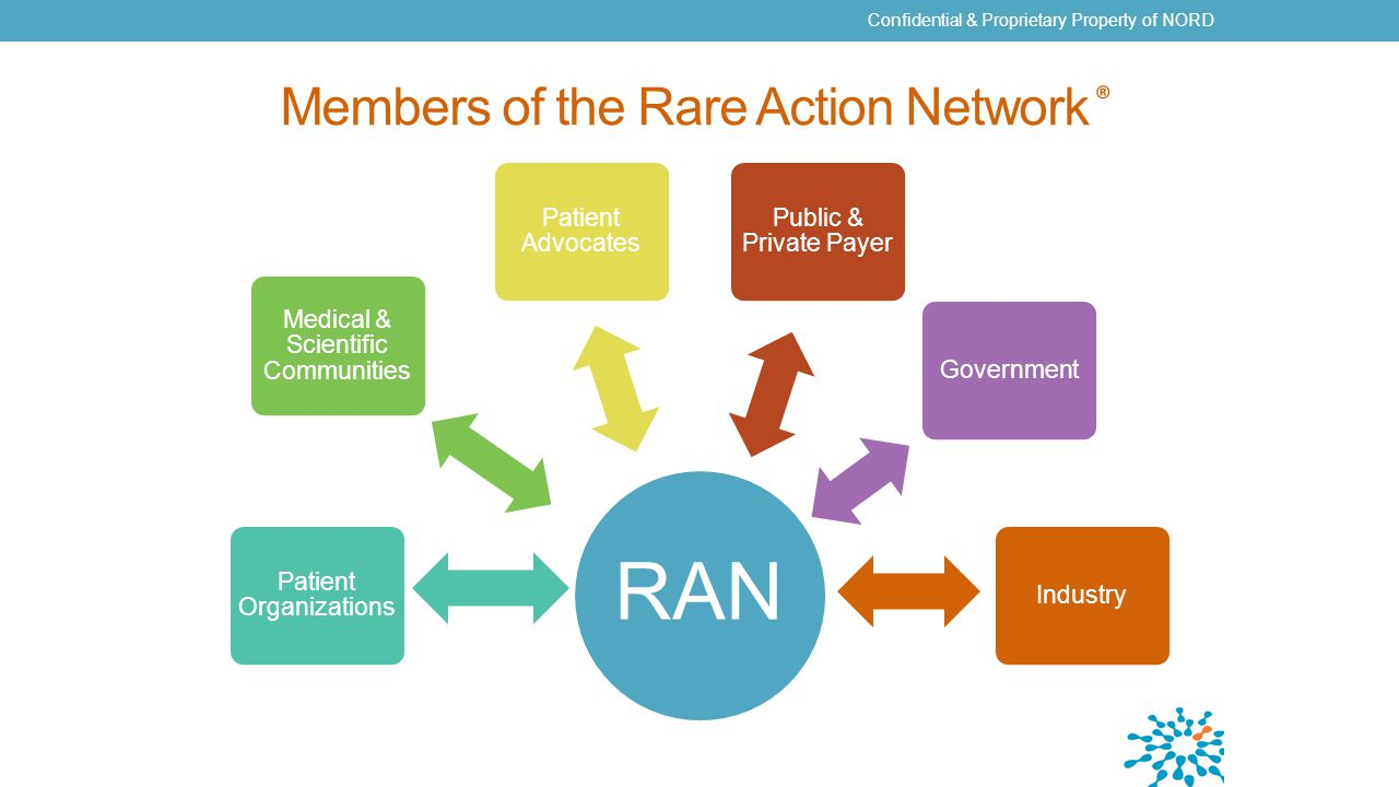 Members of the Rare Action Network ® Confidential & Proprietary Property of NORD RAN Patient Organizations Medical & Scientific Communities Patient Advocates Public & Private Payer GovernmentIndustry