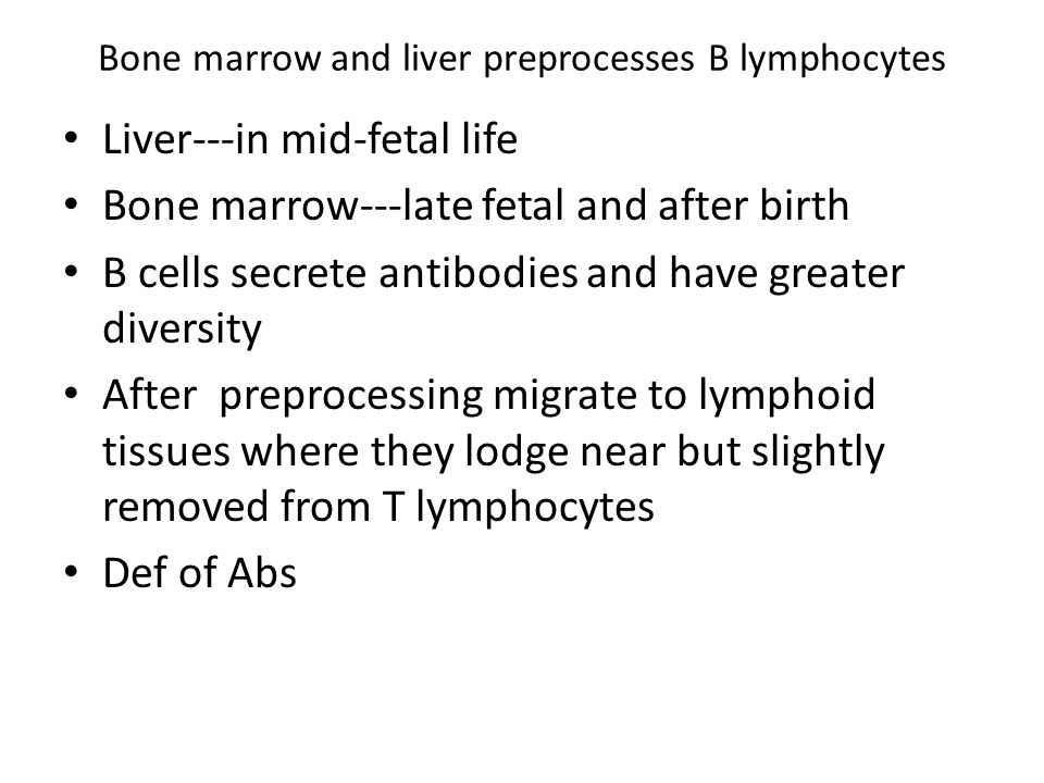 Bone marrow and liver preprocesses B lymphocytes Liver---in mid-fetal life Bone marrow---late fetal and after birth B cells secrete antibodies and hav