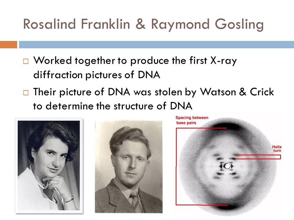 Rosalind Franklin & Raymond Gosling  Worked together to produce the first X-ray diffraction pictures of DNA  Their picture of DNA was stolen by Watson & Crick to determine the structure of DNA