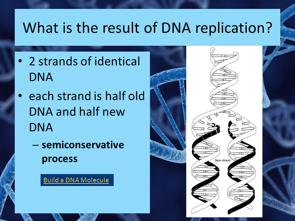 What is the result of DNA replication.
