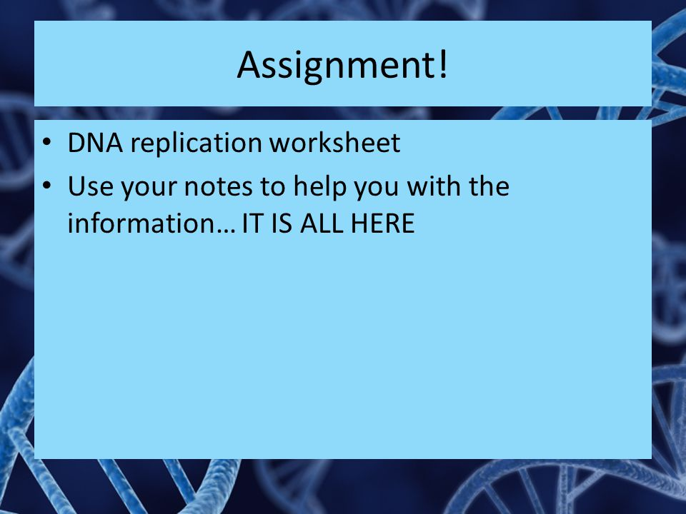 Assignment! DNA replication worksheet Use your notes to help you with the information… IT IS ALL HERE