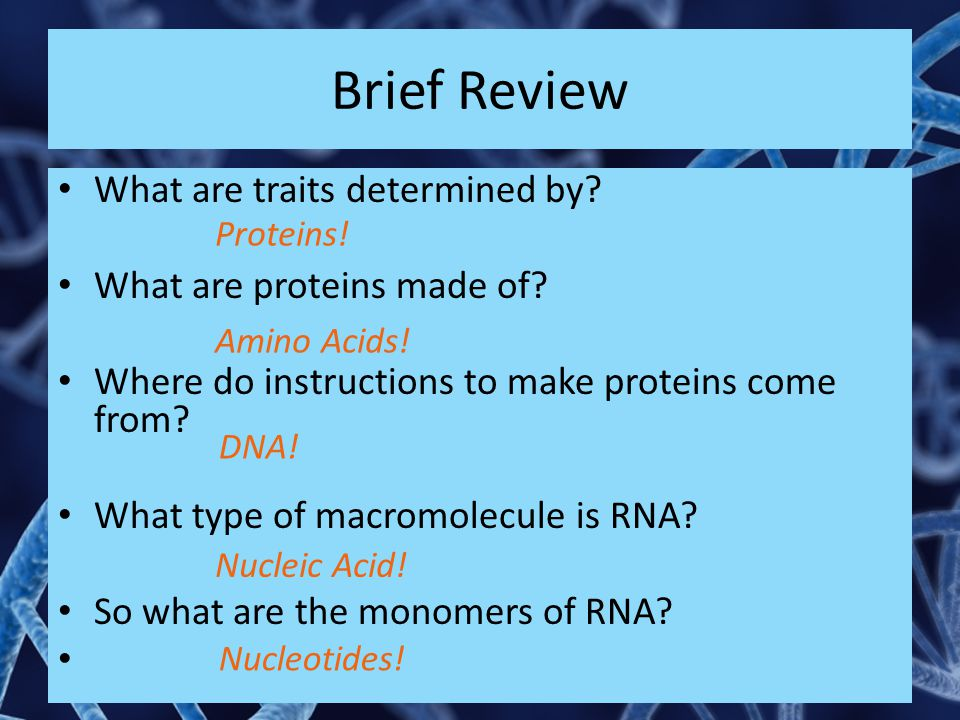 Brief Review What are traits determined by? What are proteins made of? Where do instructions to make proteins come from? What type of macromolecule is