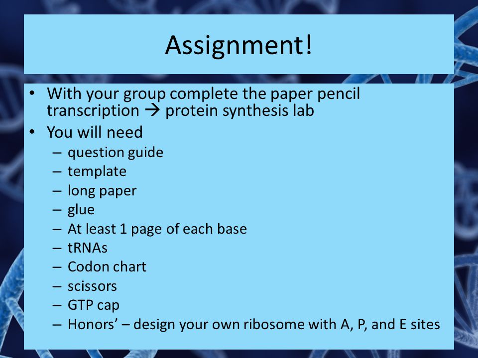 Assignment! With your group complete the paper pencil transcription  protein synthesis lab You will need – question guide – template – long paper – g