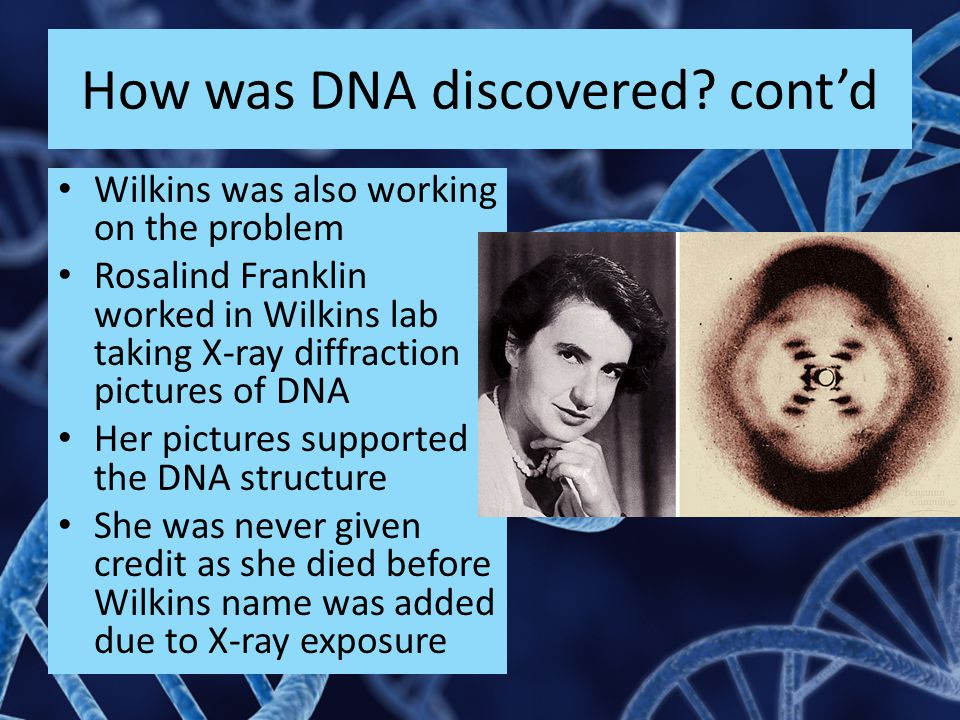 How was DNA discovered? cont'd Wilkins was also working on the problem Rosalind Franklin worked in Wilkins lab taking X-ray diffraction pictures of DN