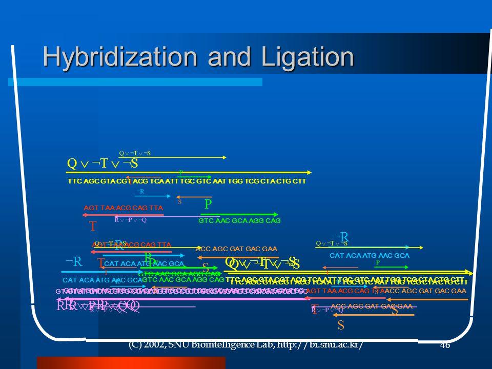 (C) 2002, SNU Biointelligence Lab, http://bi.snu.ac.kr/46 Hybridization and Ligation GTA TGT TAC TTG CGT CAG TTG CGT TCC GTC AAG TCG CAT GCA TGC R  ¬P  ¬Q CAT ACA ATG AAC GCA ¬R¬R ACC AGC GAT GAC GAA S TTC AGC GTA CGT ACG TCA ATT TGC GTC AAT TGG TCG CTA CTG CTT Q  ¬T  ¬S AGT TAA ACG CAG TTA T GTC AAC GCA AGG CAG P GTA TGT TAC TTG CGT CAG TTG CGT TCC GTC AAG TCG CAT GCA TGC R  ¬P  ¬Q CAT ACA ATG AAC GCA ¬R¬R ACC AGC GAT GAC GAA S TTC AGC GTA CGT ACG TCA ATT TGC GTC AAT TGG TCG CTA CTG CTT Q  ¬T  ¬S AGT TAA ACG CAG TTA T GTC AAC GCA AGG CAG P GTA TGT TAC TTG CGT CAG TTG CGT TCC GTC AAG TCG CAT GCA TGC R  ¬P  ¬Q CAT ACA ATG AAC GCA ¬R¬R ACC AGC GAT GAC GAA S TTC AGC GTA CGT ACG TCA ATT TGC GTC AAT TGG TCG CTA CTG CTT Q  ¬T  ¬S AGT TAA ACG CAG TTA T GTC AAC GCA AGG CAG P