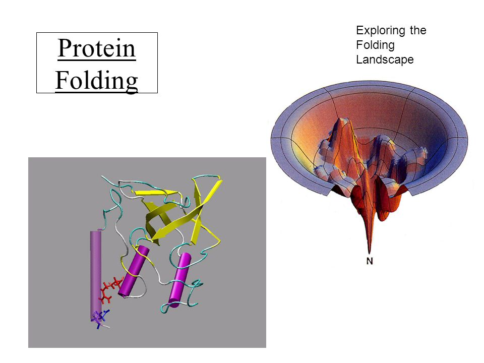 Protein Folding Exploring the Folding Landscape