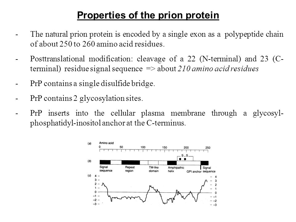 Properties of the prion protein -The natural prion protein is encoded by a single exon as a polypeptide chain of about 250 to 260 amino acid residues.