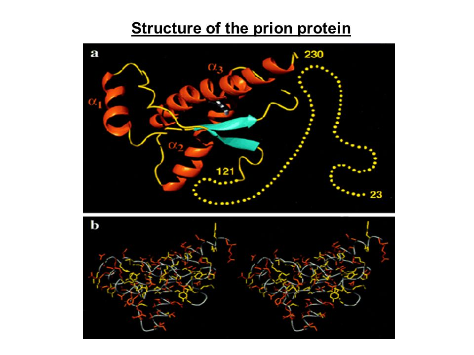 Structure of the prion protein