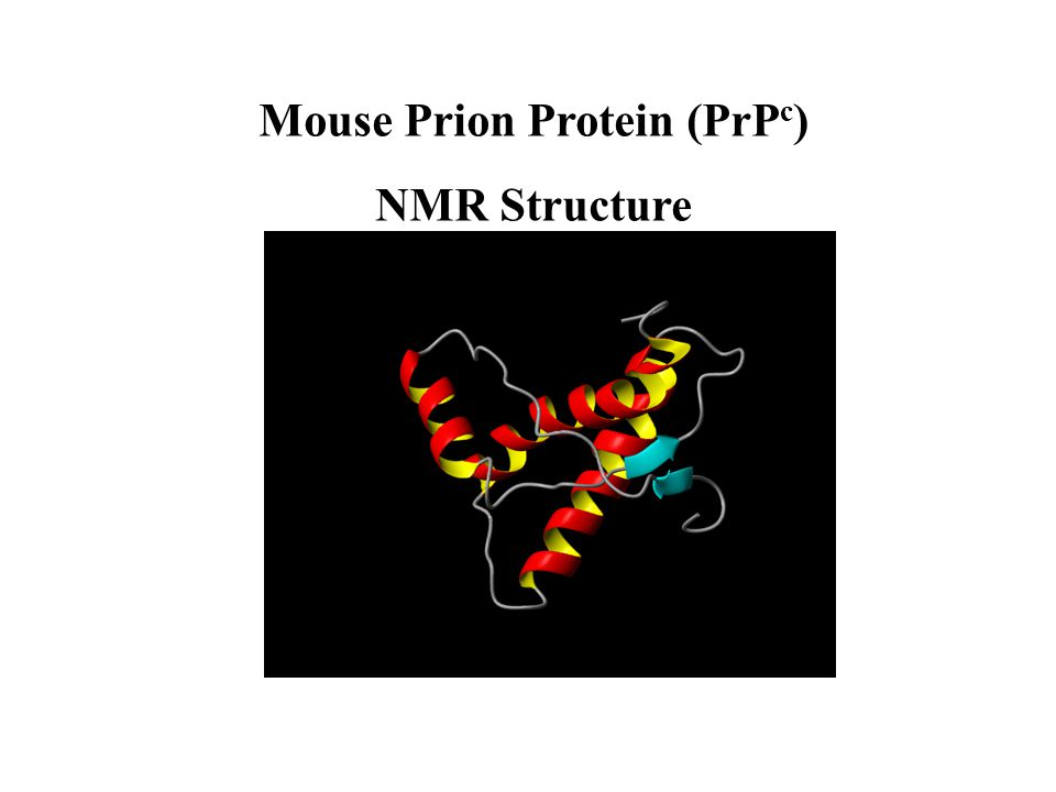 Mouse Prion Protein (PrP c ) NMR Structure
