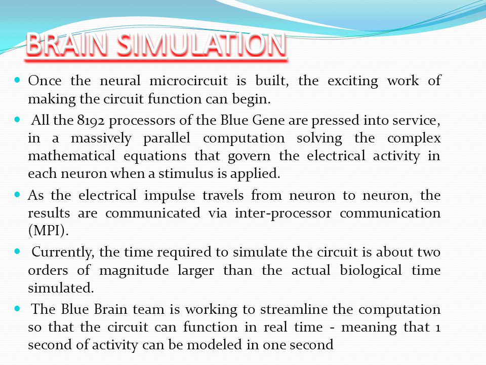 BRAIN SIMULATION Once the neural microcircuit is built, the exciting work of making the circuit function can begin. All the 8192 processors of the Blu