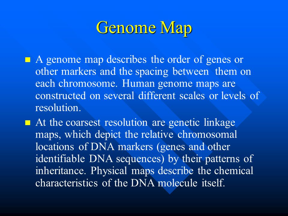 Genome Map A genome map describes the order of genes or other markers and the spacing between them on each chromosome.
