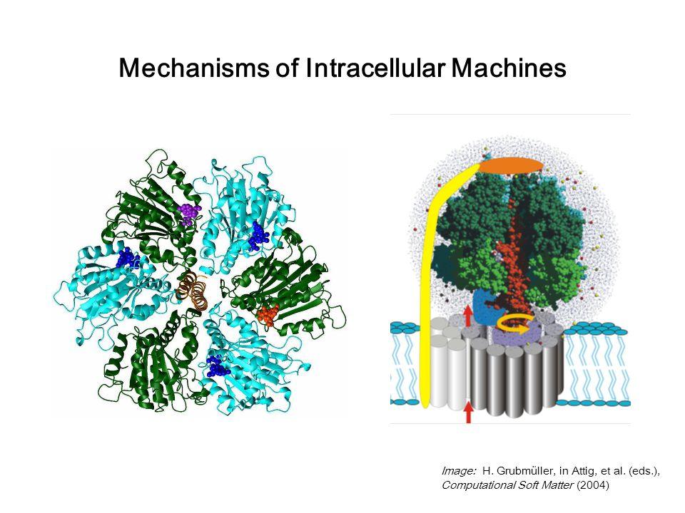 Image: H. Grubmüller, in Attig, et al.
