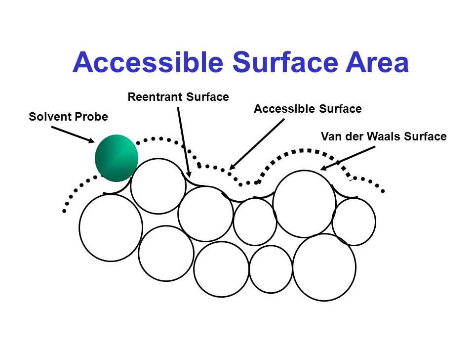 Accessible Surface Area Solvent Probe Accessible Surface Van der Waals Surface Reentrant Surface