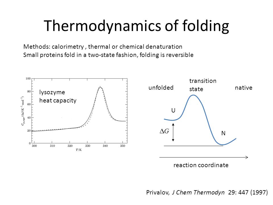 Kinetics of folding Plaxco et al, JMB 277:985 (1998); Biochemistry 39:11177 (2000) For many proteins, folding rate is determined by their topology (contact order) However: newer research suggests strong outliers; C.R.