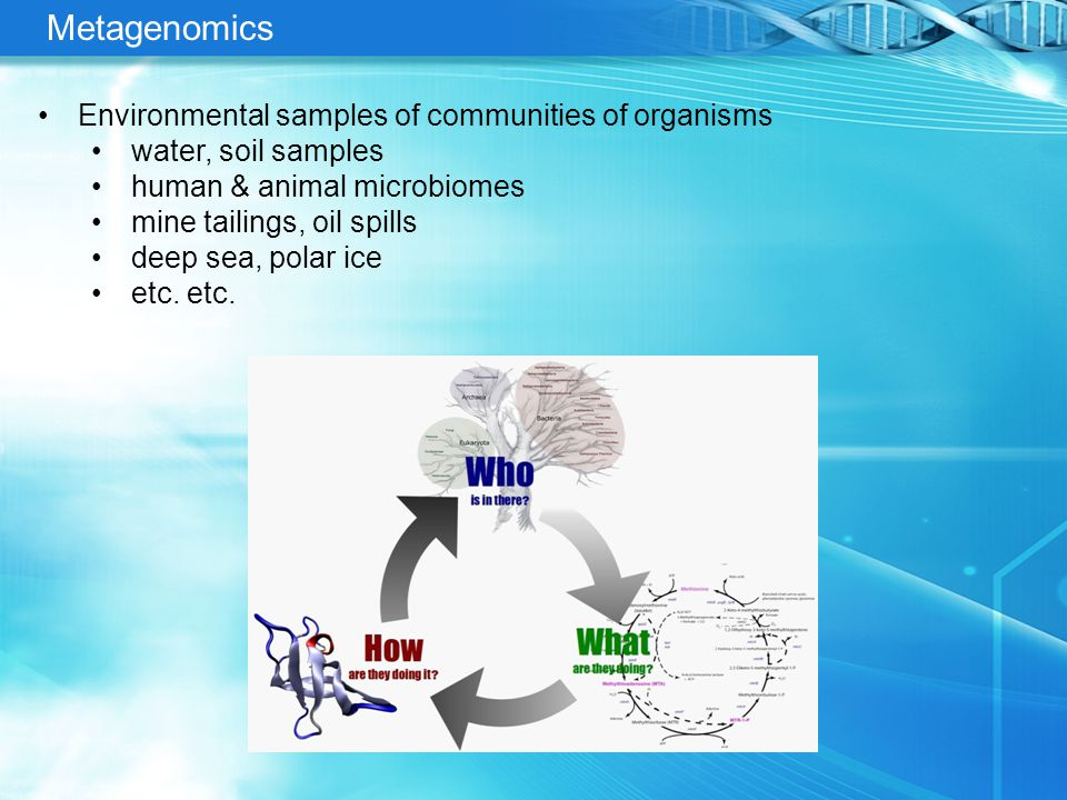 Metagenomics Environmental samples of communities of organisms water, soil samples human & animal microbiomes mine tailings, oil spills deep sea, polar ice etc.