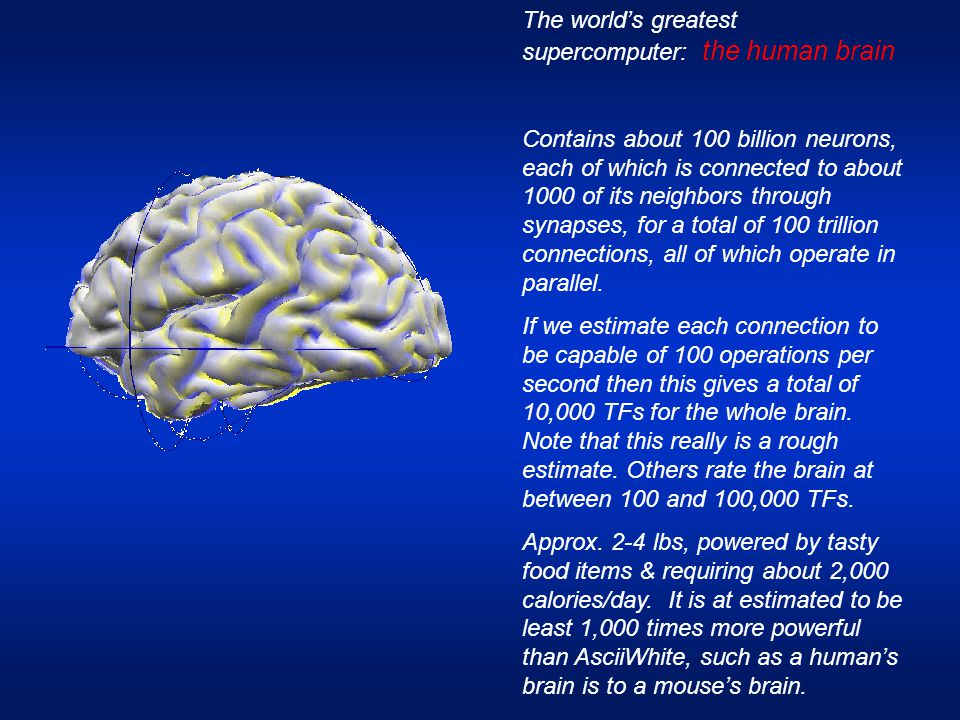 The world's greatest supercomputer: the human brain Contains about 100 billion neurons, each of which is connected to about 1000 of its neighbors thro