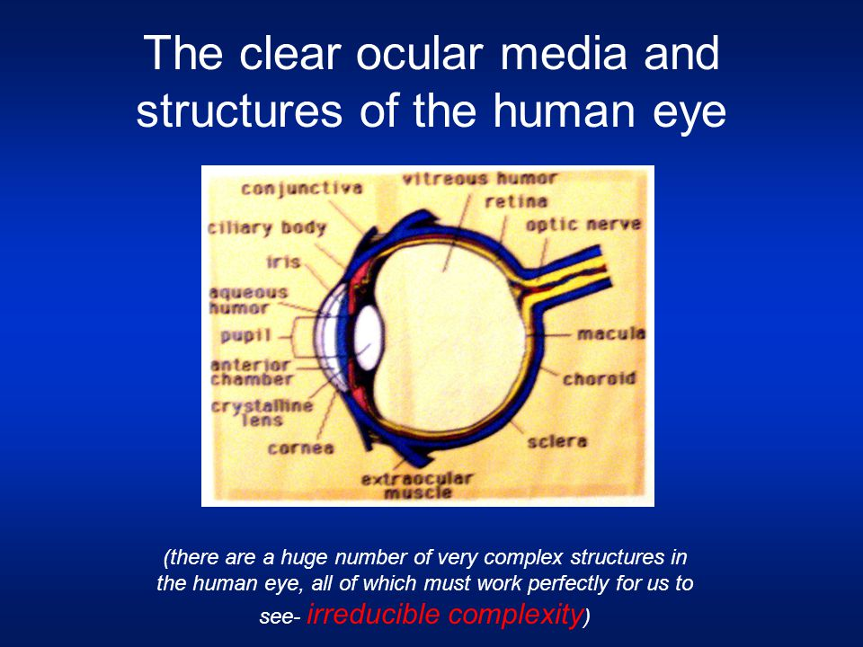 The clear ocular media and structures of the human eye (there are a huge number of very complex structures in the human eye, all of which must work pe