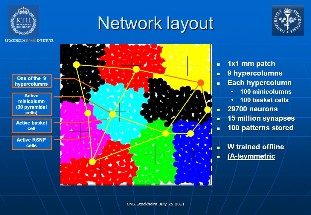 STOCKHOLM BRAIN INSTITUTE Network layout CNS Stockholm July 25 2011 1x1 mm patch 1x1 mm patch 9 hypercolumns 9 hypercolumns Each hypercolumn Each hype
