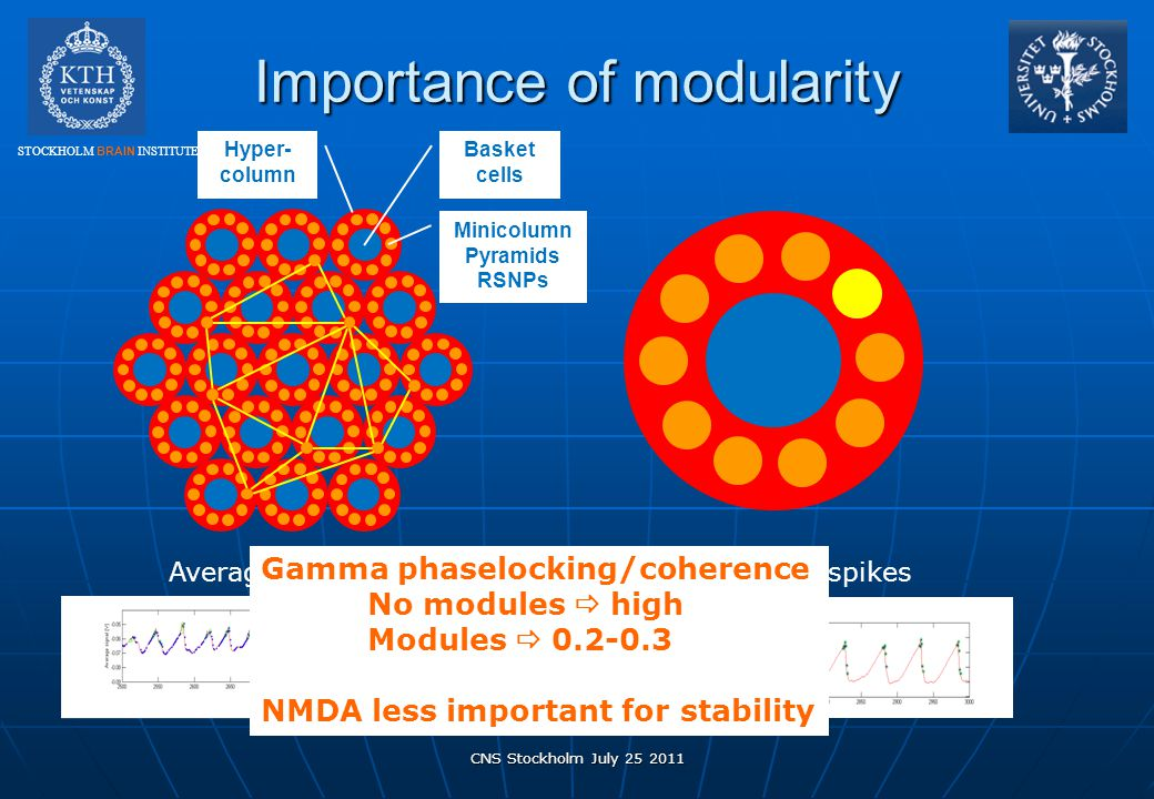 STOCKHOLM BRAIN INSTITUTE Importance of modularity CNS Stockholm July 25 2011 Minicolumn Pyramids RSNPs Basket cells Hyper- column Average V m of a mi