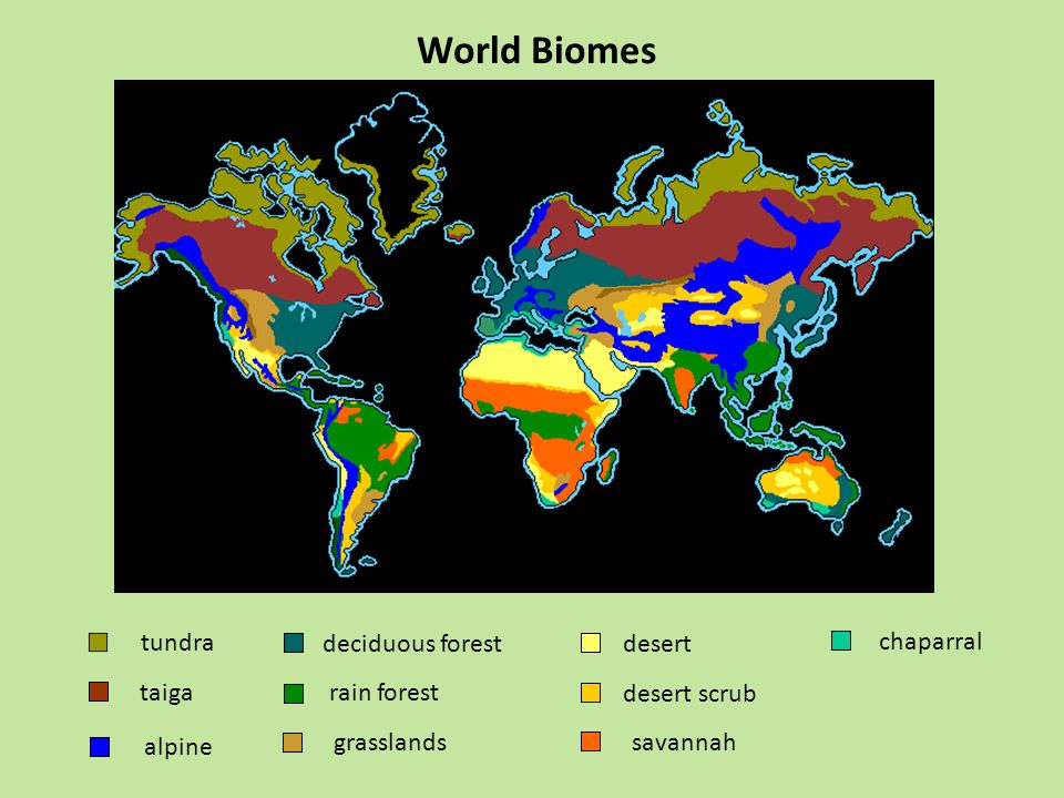 World Biomes tundra taiga grasslands deciduous forest chaparral desert desert scrub savannah rain forest alpine