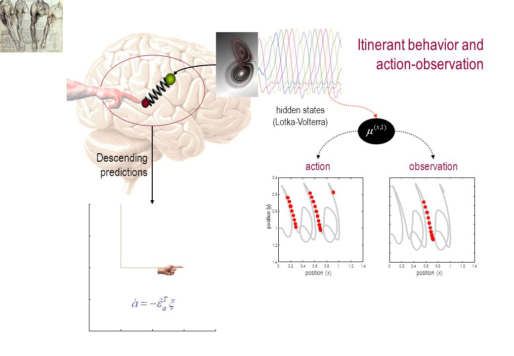 Descending predictions visual input proprioceptive input Action, predictions and priors