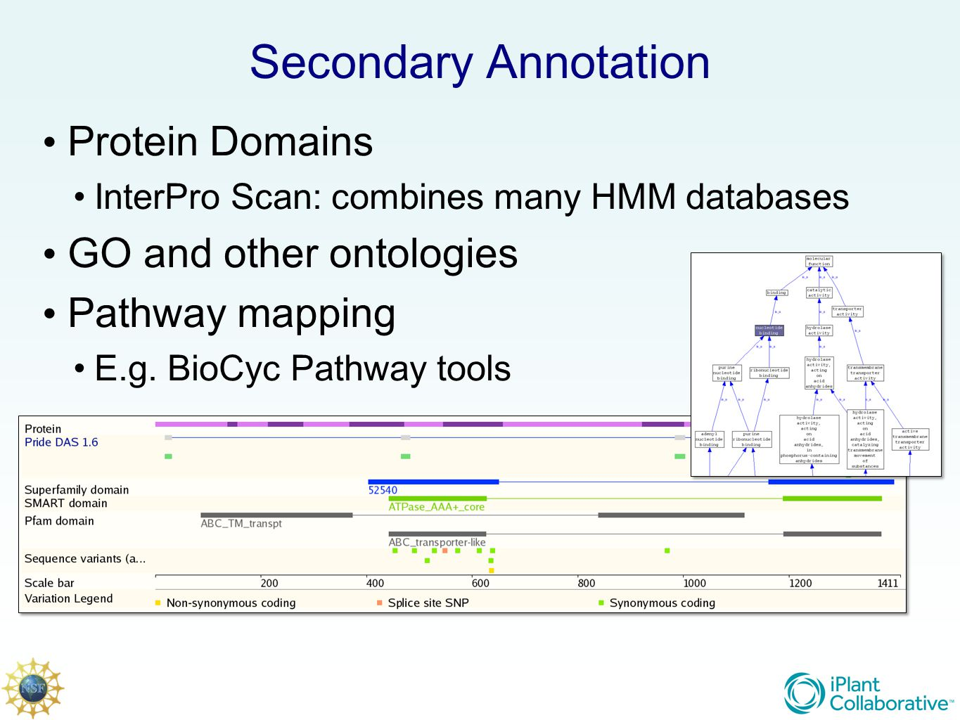 Secondary Annotation Protein Domains InterPro Scan: combines many HMM databases GO and other ontologies Pathway mapping E.g.