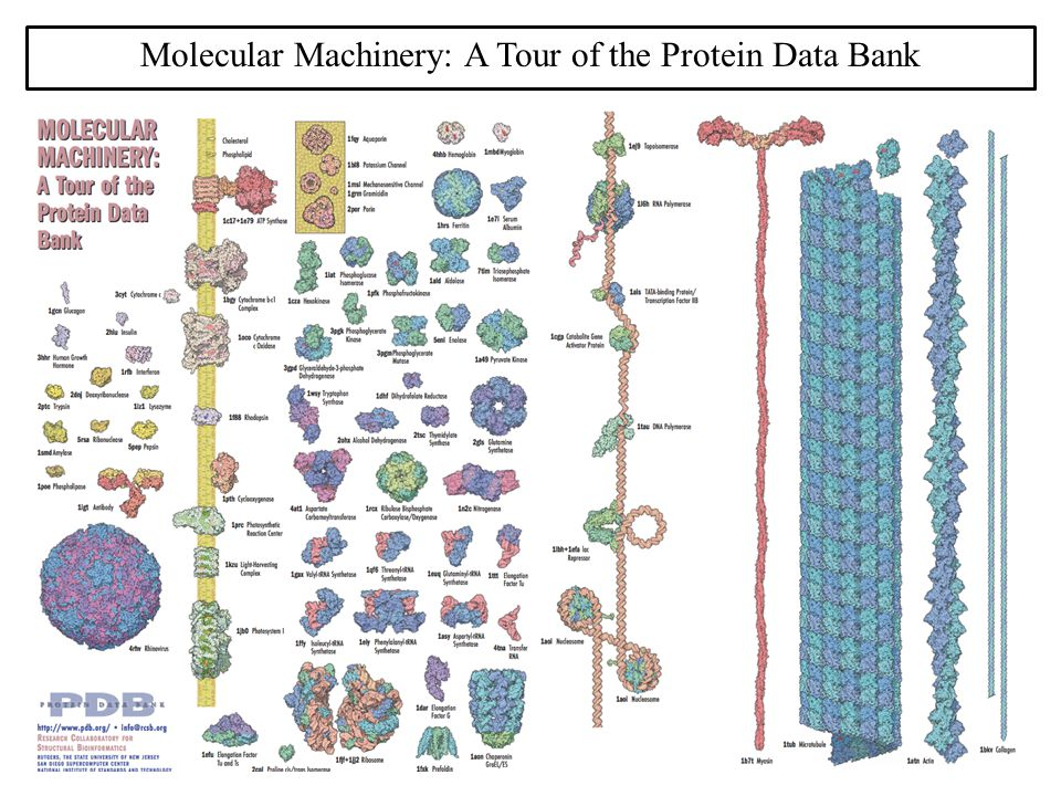 Molecular Machinery: A Tour of the Protein Data Bank