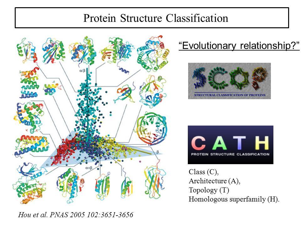 "Protein Structure Classification Hou et al. PNAS 2005 102:3651-3656 Class (C), Architecture (A), Topology (T) Homologous superfamily (H). ""Evolutionar"